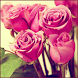 Pink Rose Wallpapers by bmks services