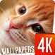 Cats Wallpapers 4k by Ultra Wallpapers