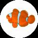Bumbble Fish by PSPTI Fastikom UNSIQ