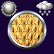 Golden Clock Weather Widget by Compass Clock and Weather