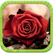 Rose Wallpapers by Dev Memory Games
