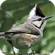 Taiwan Birds by Eco-Education and Resources Centre