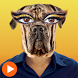Cat Face Video - Animal Face by EasternStudio.Inc