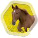 Horse Live Wallpapers by Live Wallpapers And Backgrounds