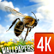 Insects Wallpapers 4K by Ultra Wallpapers