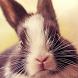 baby bunny wallpaper by Dark cool wallpaper llc