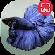Betta Fish HD Wallpapers by RinradaDev