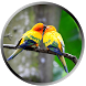 Lovers Parrot Wallpapers by beautifulwallpaper