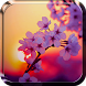 Sakura Live Wallpaper by Wallpapers and Backgrounds Live