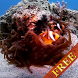 Clown Fish Video Wallpaper by CharlyK LWP