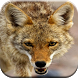 Coyote Hunting Calls by Best Ringtones For Everyone