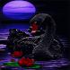 Black Swan Live Wallpaper by Daksh Apps