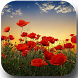 Sunset over a field of poppies by Juicy soft