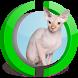 Sphynx Cat Live Wallpaper