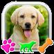 Labrador Retriever Puppy Launcher by Theme Wizard