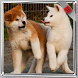 Akita Dog Wallpaper by WallpapersInc