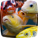 Koi Fish Live Wallpaper by My Live Wallpaper