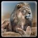 Lion king lockscreen theme by lovethemeteam