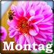 Montag by old fanny studio