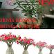 desain bonsai bunga cantik by usie demorean
