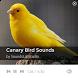Canary Bird Sounds by SoundsLabStudio