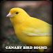 Canary Bird Sound by Ralph Studio