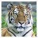 Big Cats - Live Wallpaper by Hojasoft, LLC