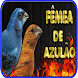 Canto Fêmea de Azulão Nuvo by ayyasy