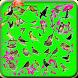101+ som de pássaros by ayyasy