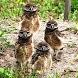 Owls Live Wallpaper by Socks N' Sandals