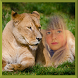 Lion Photo Frames by Photo Editor Art
