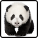 Panda Jigsaw Game by Flying Application Creator