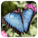 Tile Puzzles · Butterflies by Thomas Fuchs-Martin