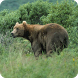 Bears Everywhere Wallpapers by Hojasoft, LLC