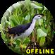 Suara Burung Ruak Ruak MP3