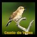 Canto de Wren 2017 by axellayasmine7