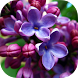 Lilac Flowers Live Wallpaper by Revenge Solution