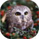 Owls Live Wallpaper by Neygavets