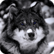 Wolf Pack 02 Live Wallpaper by MaxImages