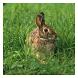 Bunny Rabbits - Live Wallpaper by Hojasoft, LLC