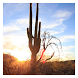 Cactus - Live Wallpaper by Hojasoft, LLC