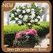 Best DIY Grow Patio Roses by GoDream Studio