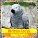 African Greys Birds Wallpaper by Tirtayasa Wallpaper