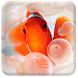 Clown Fish Live Wallpaper by Best HD Free Live Wallpapers