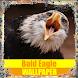 Bald Eagle Birds Wallpaper by Tirtayasa Wallpaper