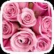 Pink Rose Water Drop by Huizhang Theme