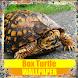 Box Turtle Reptile Wallpaper by Tirtayasa Wallpaper