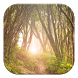Forest Tree Live Wallpapers by GL Live Wallpapers