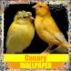Canary Birds Wallpaper by Tirtayasa Wallpaper