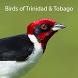 Birds of Trinidad and Tobago by Digital Business Ltd.